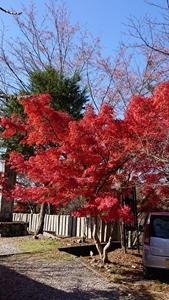 金峯山寺の紅葉
