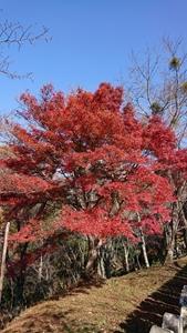 金峯山寺の紅葉その2