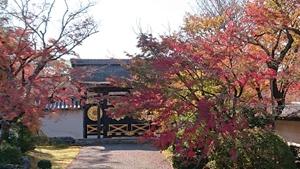 三宝院の紅葉