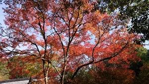 醍醐寺境内の紅葉