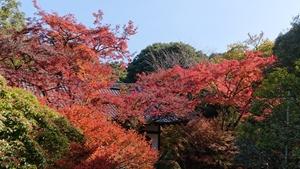醍醐寺境内の紅葉その2