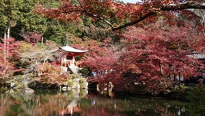 醍醐寺境内の紅葉その4