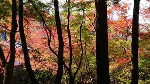 醍醐寺境内の紅葉その5