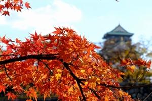 晩秋の大阪城