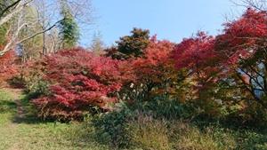 談山神社へ行く道の紅葉