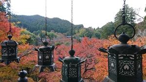 釣り灯籠と紅葉