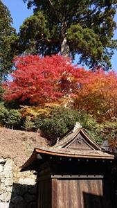 閼伽井屋と紅葉