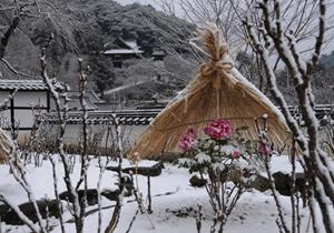 12月の長谷寺