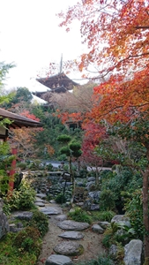 中之坊庭園から三重塔を望む