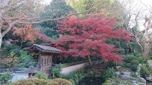 庭園「香藕園」の紅葉