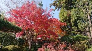 千仏院庭園