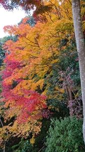 西南院庭園の紅葉その1