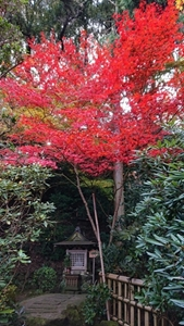 西南院庭園の紅葉その3