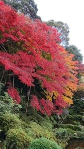 西南院庭園の紅葉その4