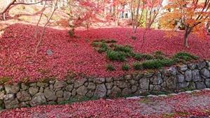 散り敷き紅葉