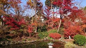 浄土庭園の紅葉その1