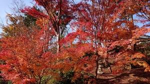 浄土庭園の紅葉その2