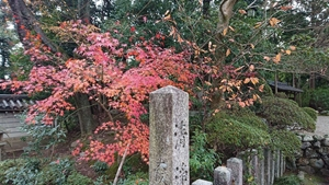 秋篠寺の紅葉