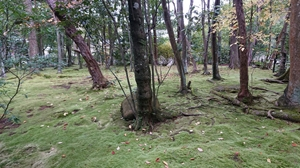 秋篠寺の苔庭その1