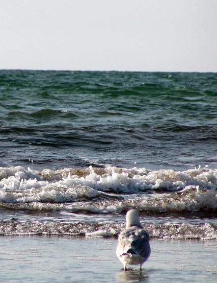 海 荒波 対峙