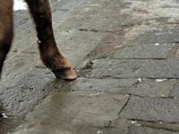 どさんこの足