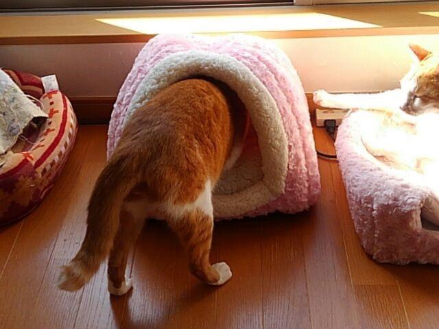 おニュー猫ドーム