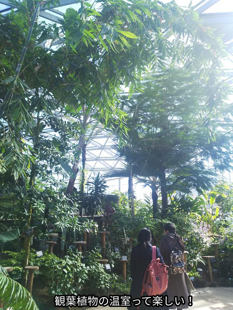 観葉植物の温室