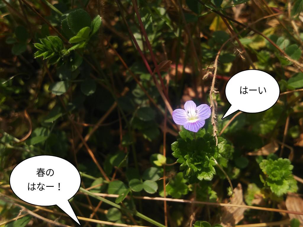 春のはなー!