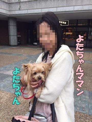 image118110401.jpg