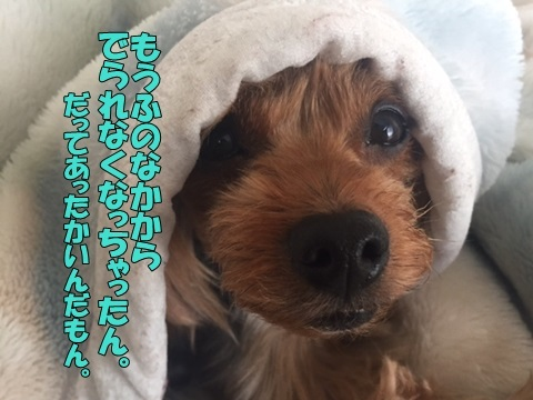 image11811120101.jpg