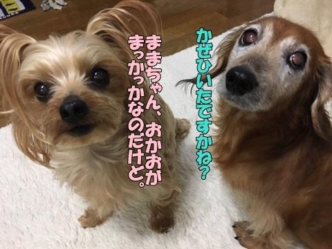 image118121201.jpeg