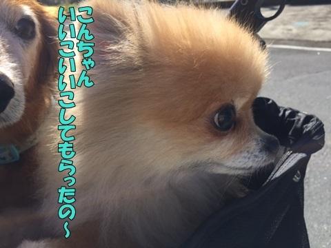 image318103002.jpg