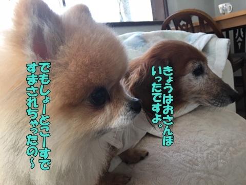 image318112701.jpeg