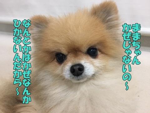 image318121201.jpeg