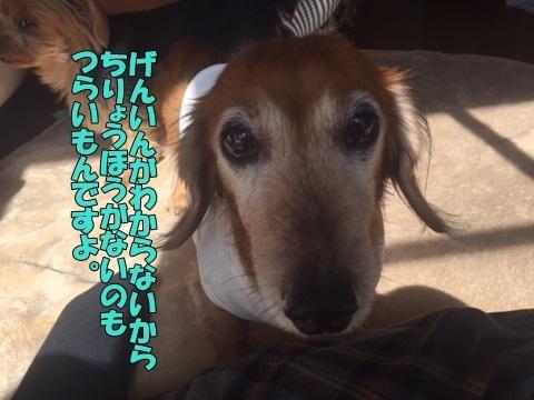 image418102101.jpg