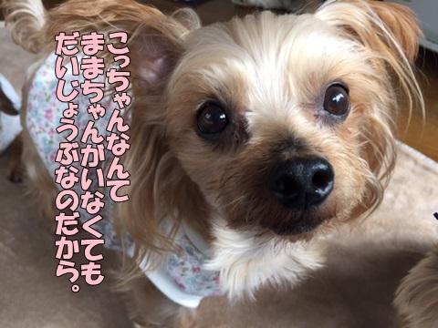 image418110502.jpg