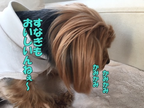 image418112801.jpeg