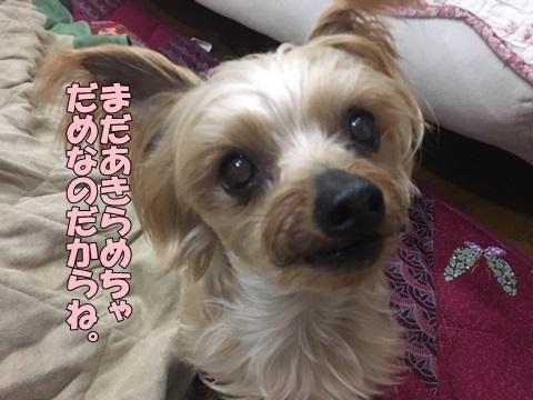 image419011601.jpeg