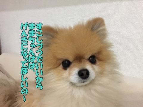image419011801.jpeg