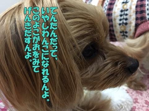 image419011802.jpeg