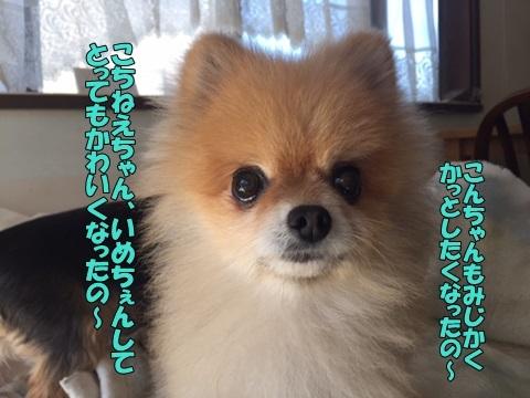 image518102901.jpg