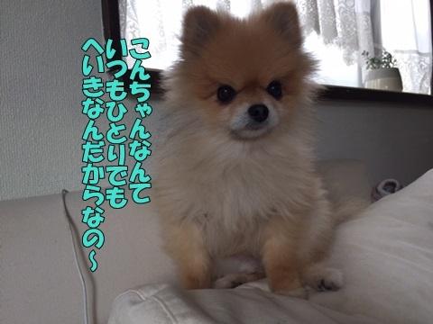image618110502.jpg