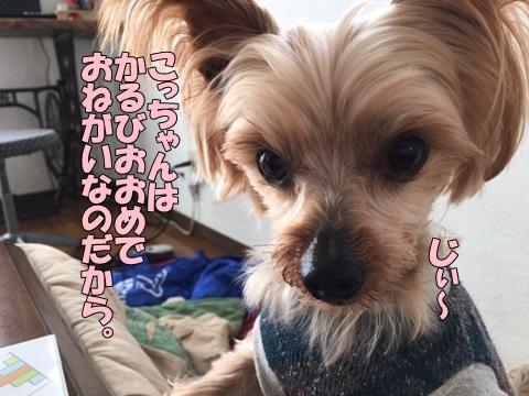 image619010401.jpeg