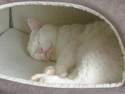 冬仕様のベッドです