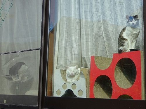 窓際警備隊