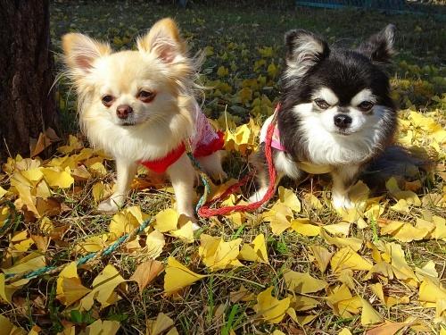 ナッツ&柚子の公園散歩