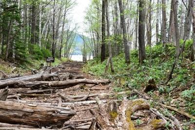倒木があり歩きづらい タウシュベツ
