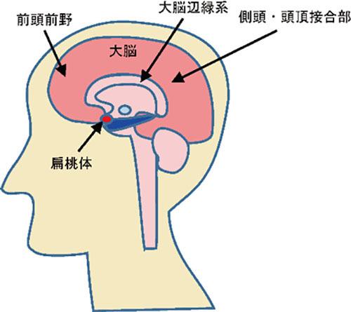 攻撃行動に加担する心と脳の背景
