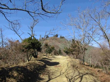 190119桜山 (2)s