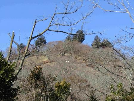 190119桜山 (3)s